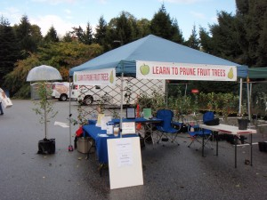 My Pruning Booth at the 2014 Apple Festival
